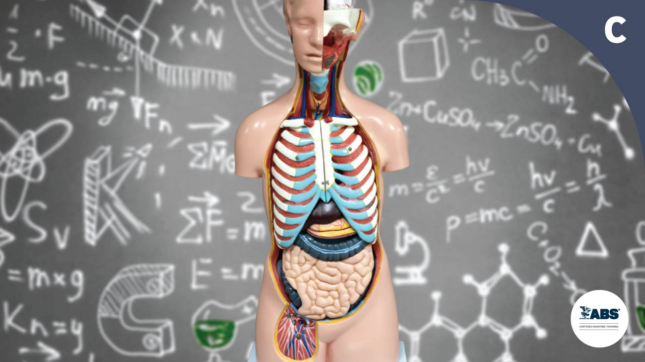 1025 Structure & Function of human body